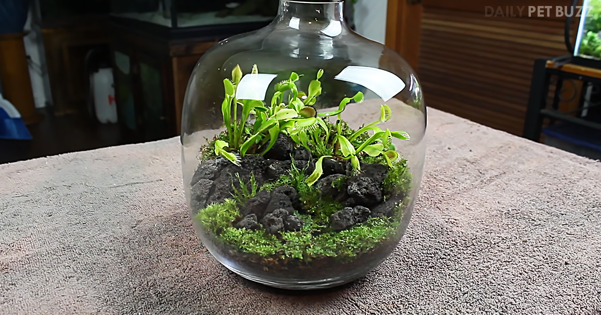 Learn How To Create Your Own Carnivorous Fly Trap