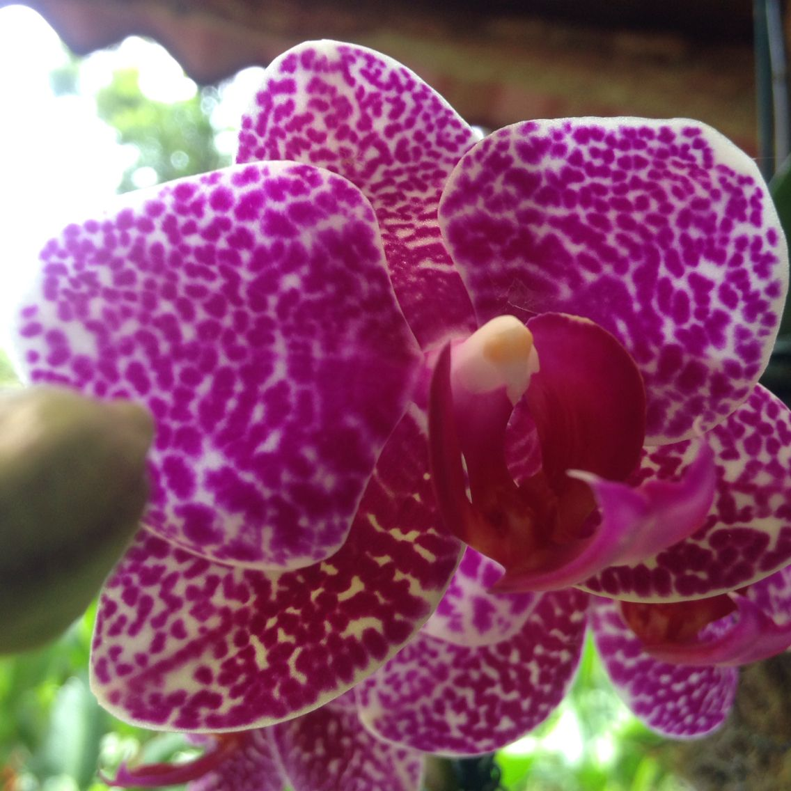 Cool speckled orchid
