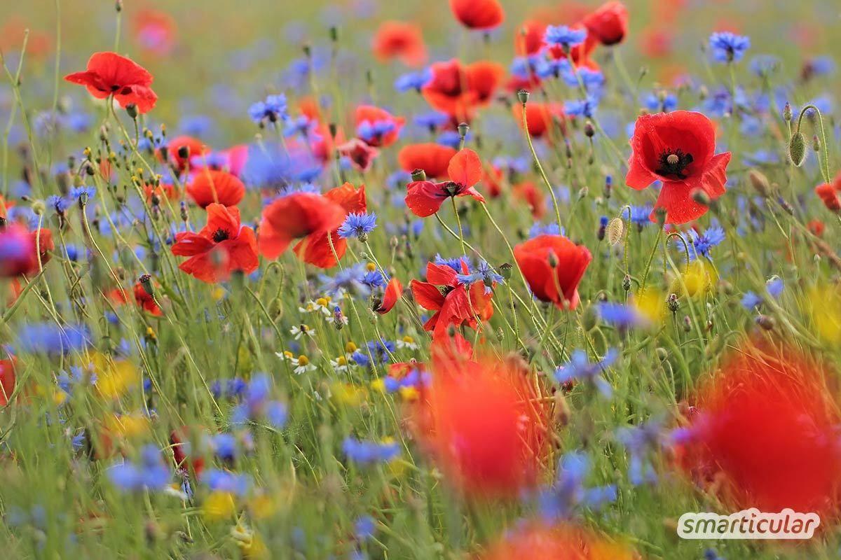 Aussaatkalender Fur Juni Diese Gemuse Krauter Und Blumen Jetzt Saen In 2020 Aussaat Kalender Krauter Pflanzen Pflanzen