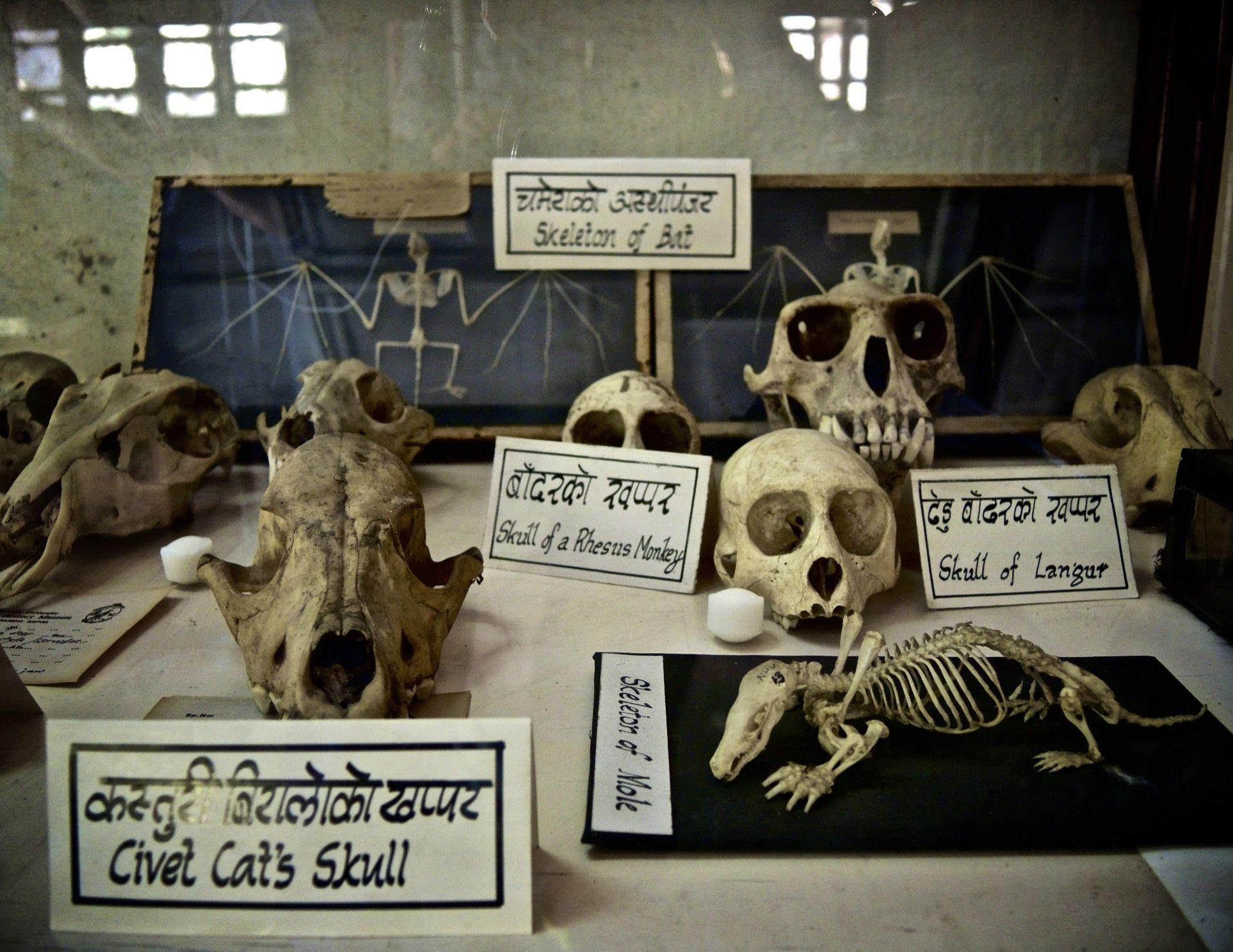 Natural History Museum Kathmandu Nepal   Elsbeth Vorstenbosch