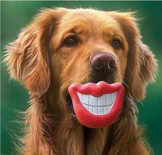 2 Treat Fetch Ball Toy Even Floats Dog Puppy Pet Fun