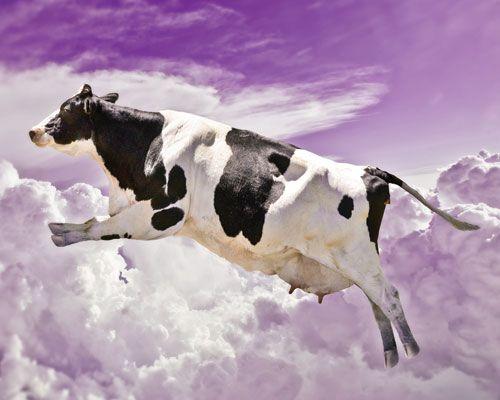 Flying Cow คนหาดวย Google Phets Imagination World Cow World