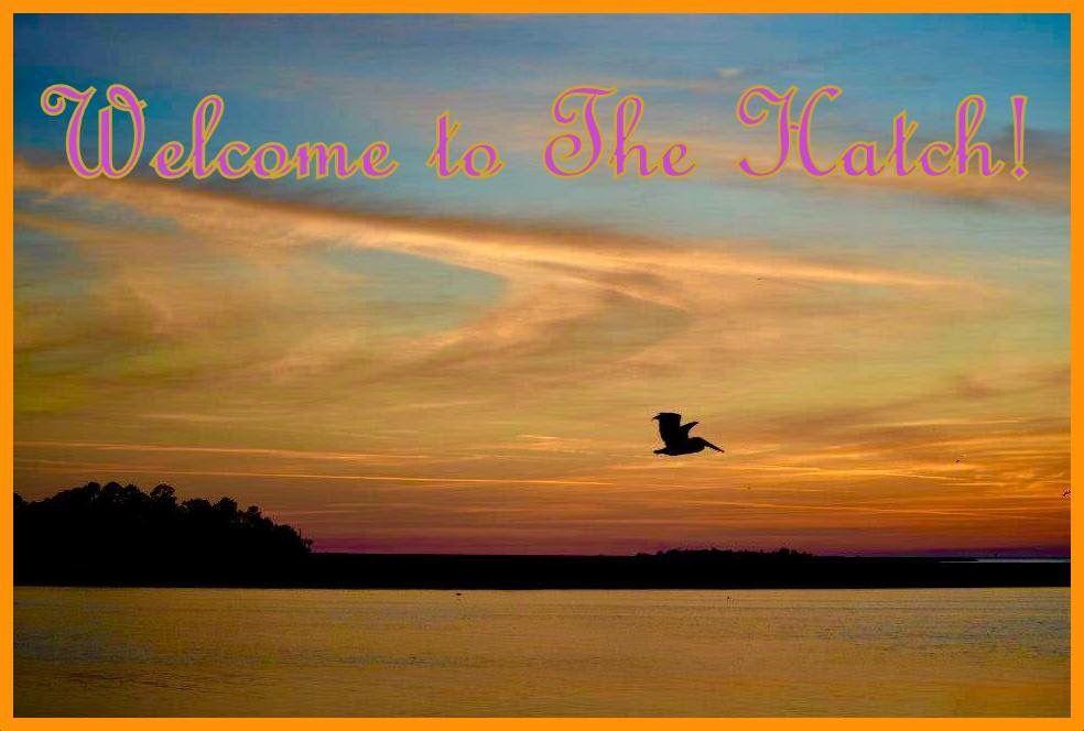 Welcome to The Hatch!  Steinhatchee, FL