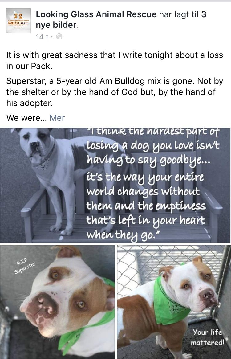 7/7/16 SUPERSTAR IS FOREVER GONE KILLED BY HIS ADOPTER