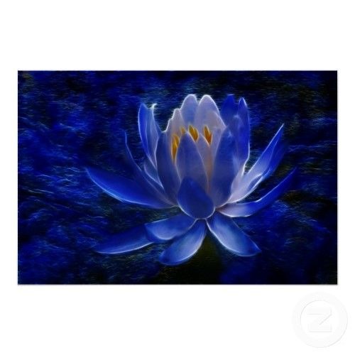 Blue Lotus Flower Meaning Lotus Flower And Its Meaning By Laureenr