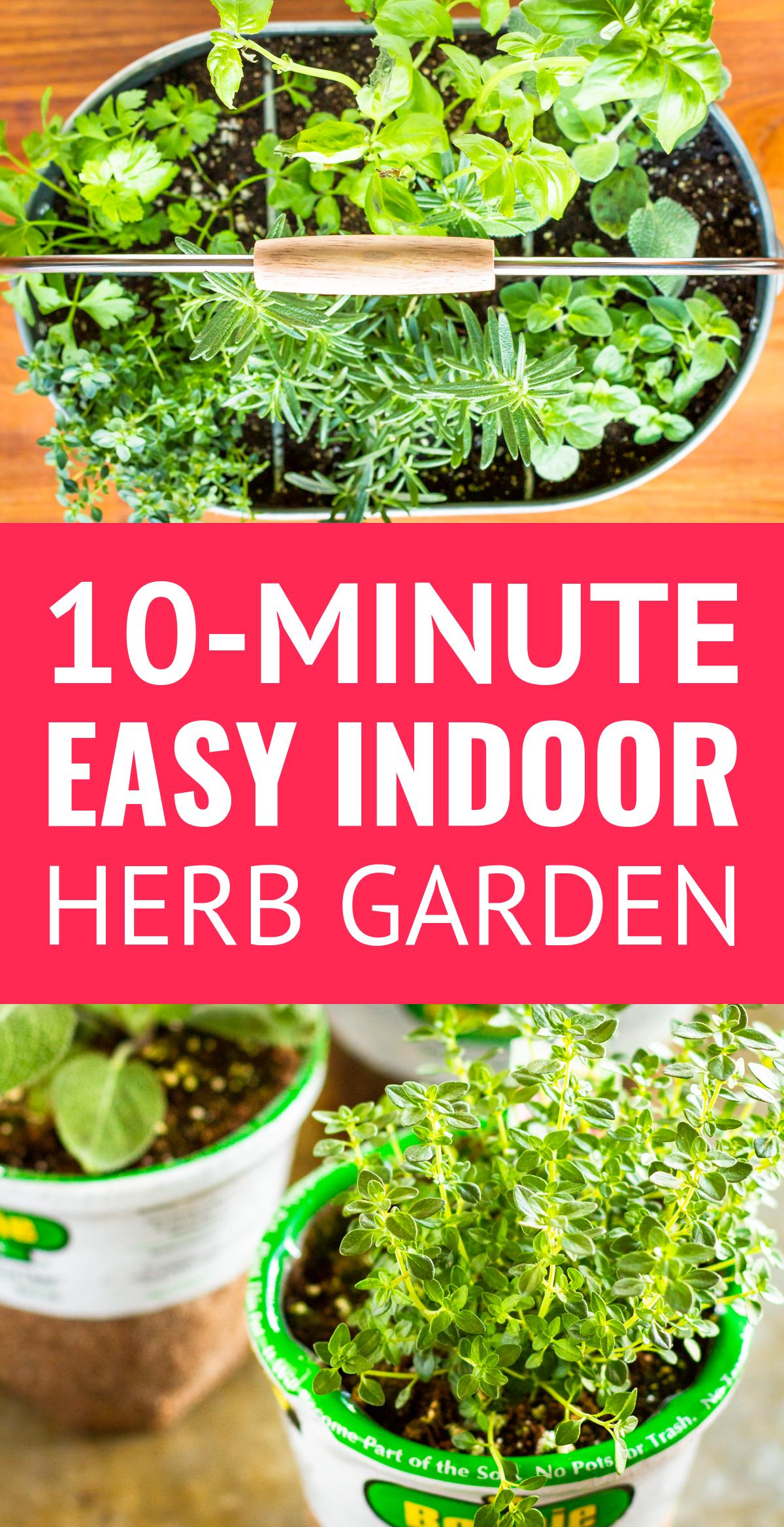 Easy Diy Indoor Herb Garden This Simple Indoor Herb 640 x 480