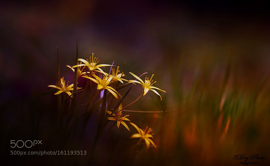 small yellow by 3DogPhoto