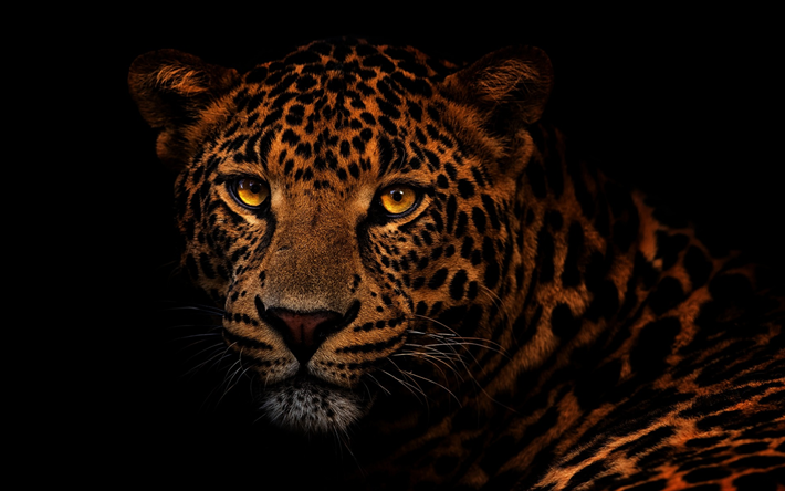 Download Wallpapers Leopard Wild Cat Dangerous Animals Leopard On A Black Background Animals Black Background Painting Dangerous Animals