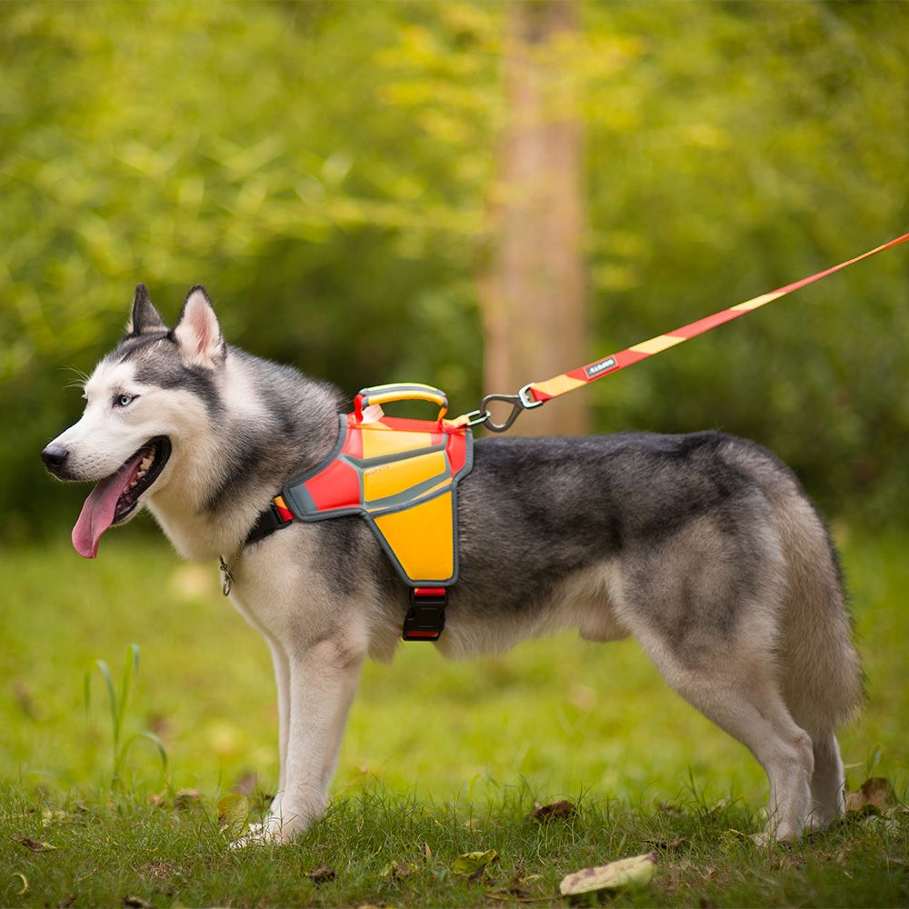 Massage Dog Harness Spanish Style Qqpets Dog Doglovers Massage