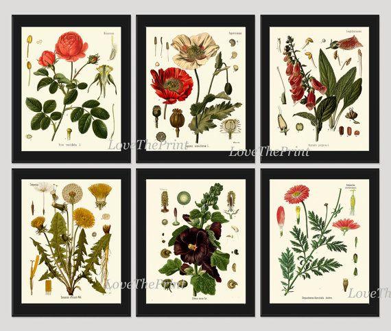 Dark Red Roses Flowers Watercolor Botanical Art Boho: Botanical Print Set Of 6 Art Beautiful Antique Red Rose