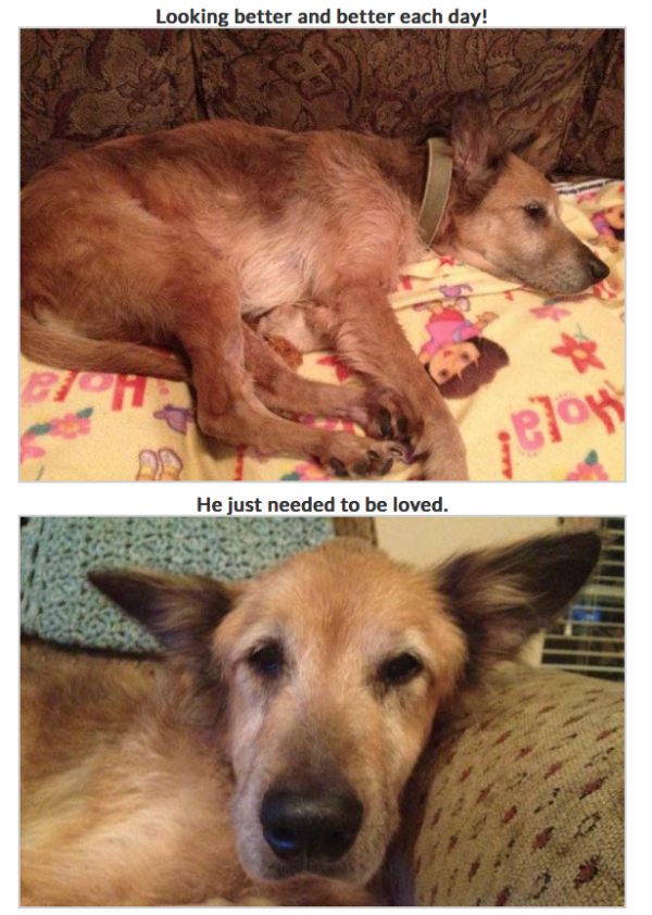 No One Wanted This 16 Year Old Stray What Happened Next Will Bring Tears To Your Eyes Petflow Blog The Most Interesting Ne Dog Pounds Old Dogs Pet Parent