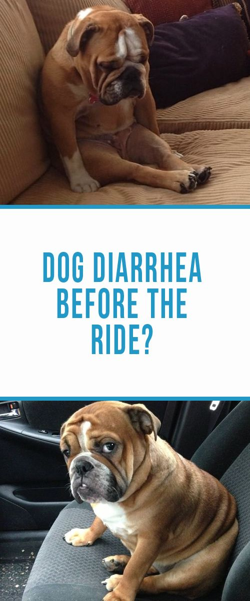 Dog Diarrhea 5 Simple Tips To Help A Puppy With An Upset Stomach