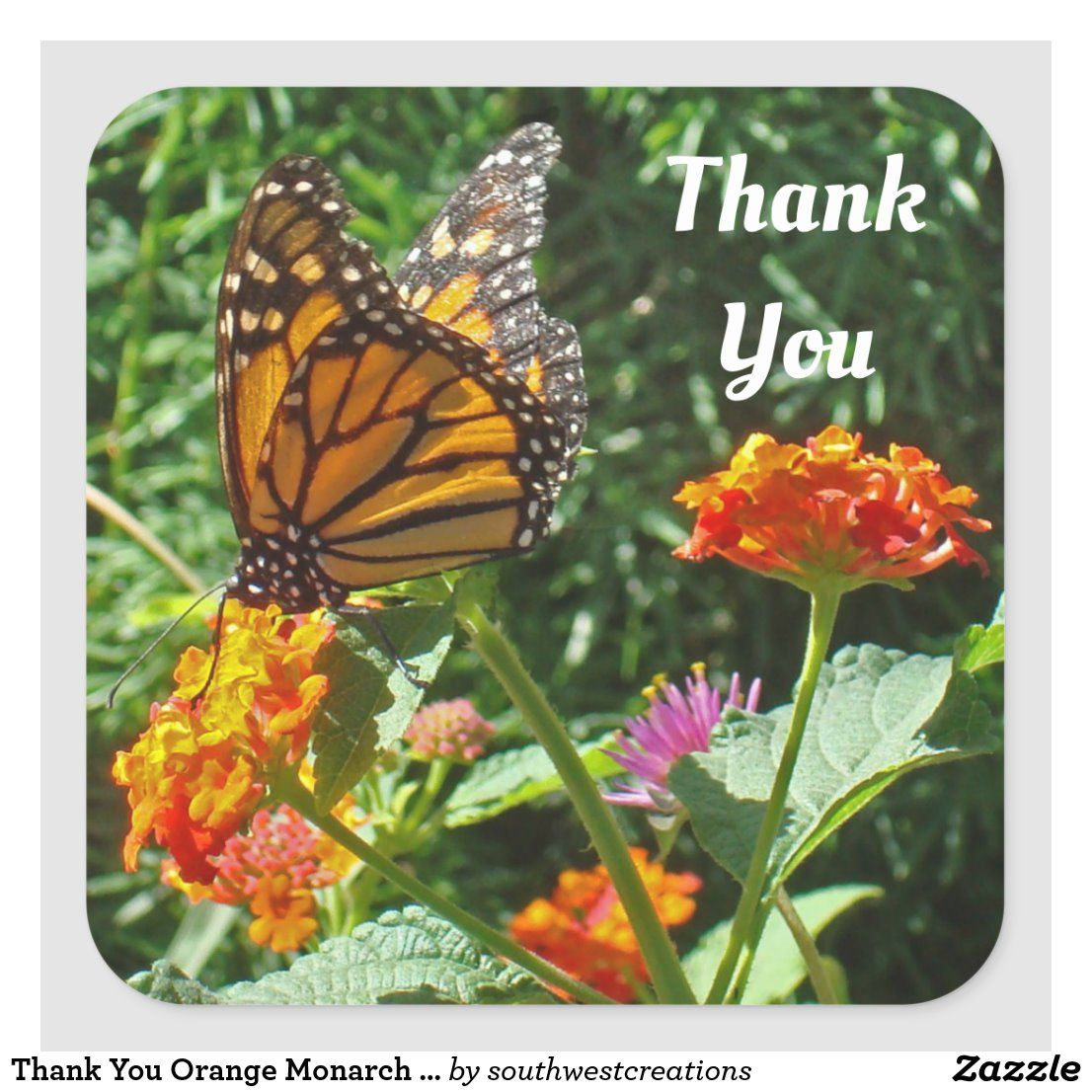 Thank You Orange Monarch Butterfly Photo Nature Square