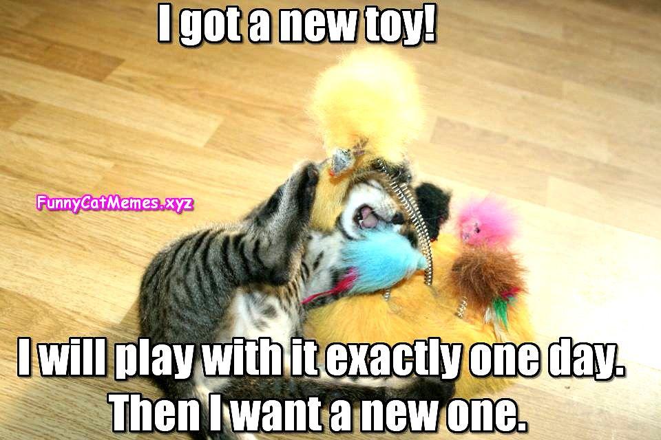Top Laughing So Hard Cat Memes Cat Memes Youtube Funny Cat Memes Cat Memes Clean Cat Quotes Funny