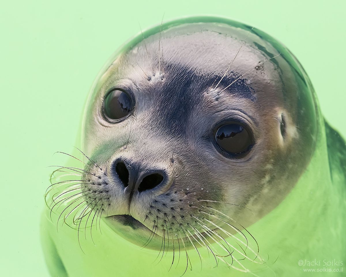 Nature Cute seals, Cute animal memes, Sea animals