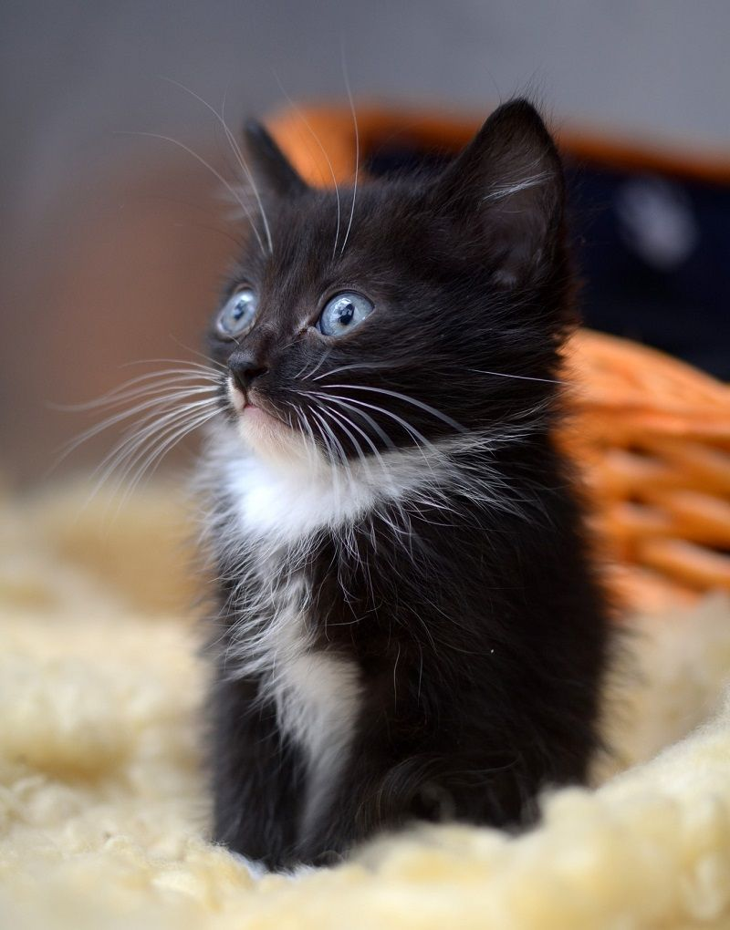 Change A Life Forever And Adopt A Cat Or Kitten From Rspca South Australia Your New Best Friend Will Reward You With Dev Dog Rescue Idea Cat Adoption Animals