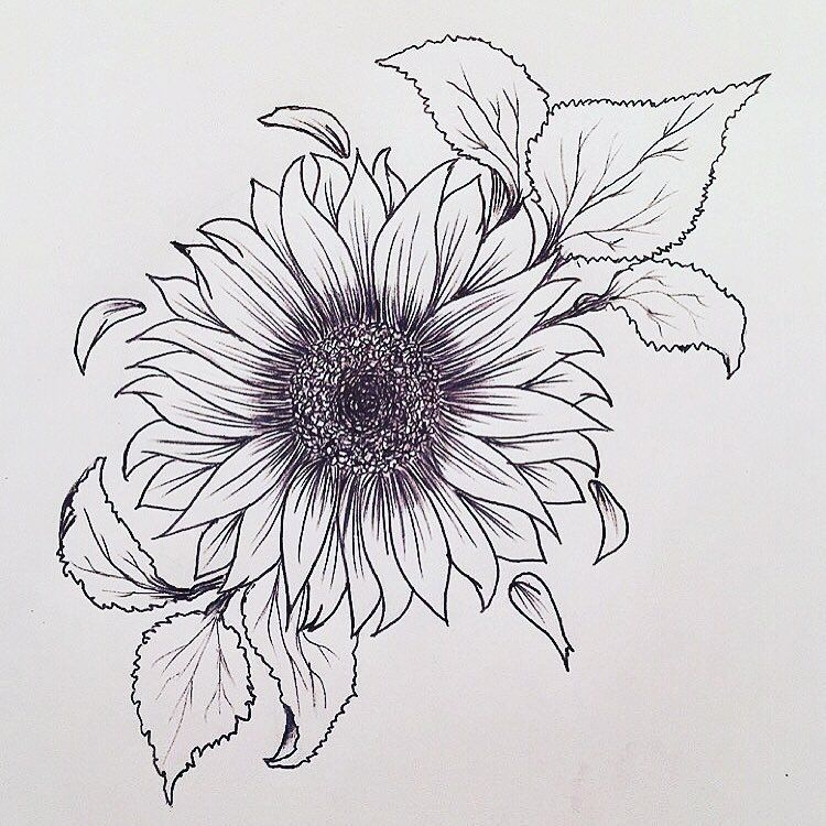 Line Drawing Sunflower : Sunflower tattoo outline pictures to pin on pinterest