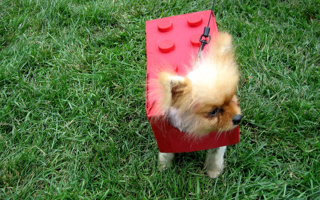 6 Funny Dog Halloween Costumes You Can Make With Little Or No