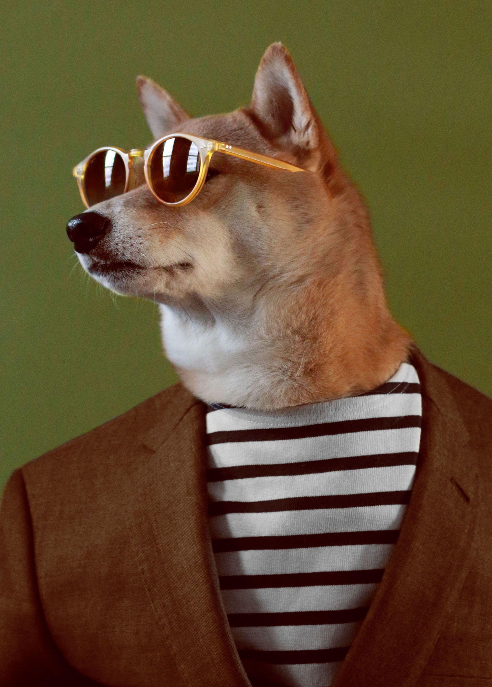 Exclusive: Meet Menswear Dog