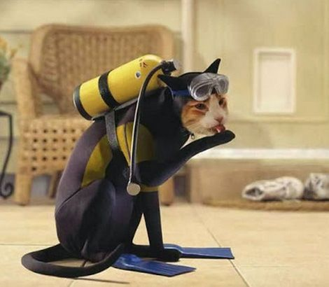 Ten Pictures Of Animals In Scuba Diving Gear Who Are Diving