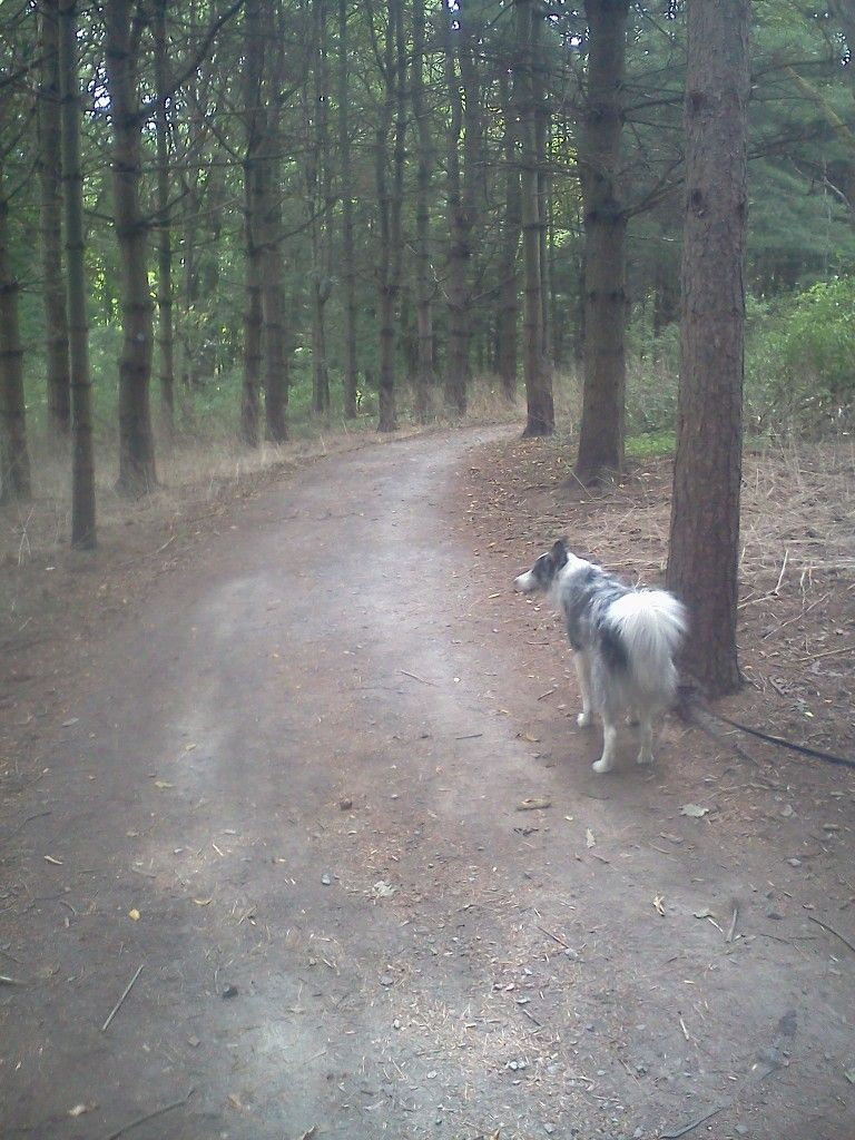 5 reasons to obey the leash law (yes, I'm talking to you