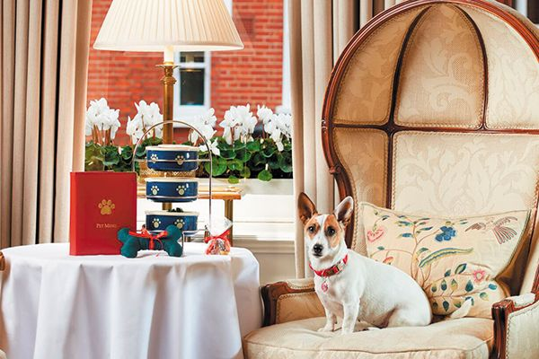 Have Tea With Your Dog At The Egerton House Hotel In London Egerton House Hotel Dog Hotel Red Carnation