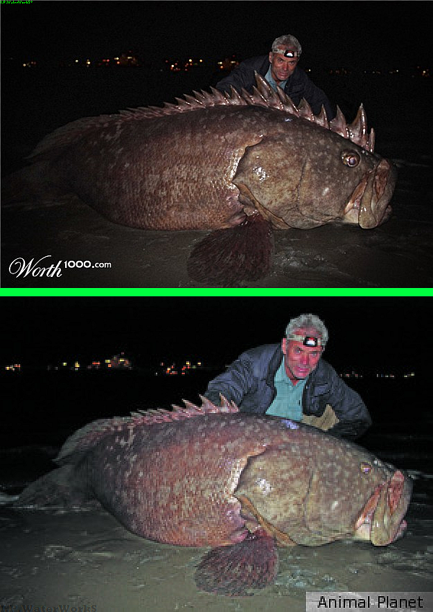 Fake goliath the river monster top image contest for Monster fish show