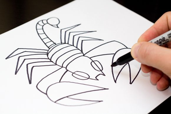 How To Draw A Scorpion Art For