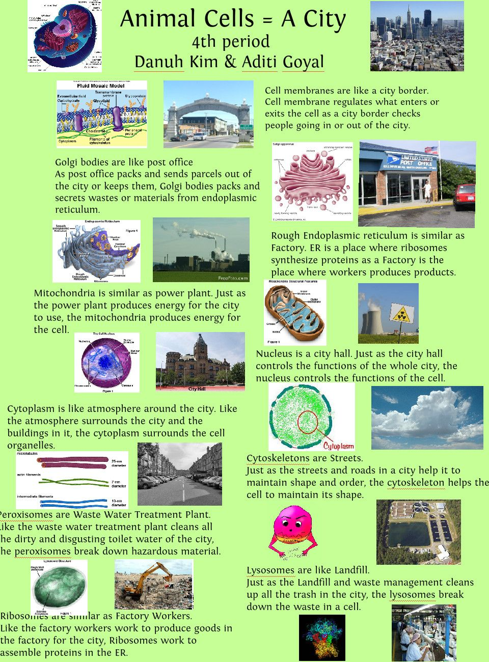 Cell City Project Cellcity Animal And Plant Cells Pinterest 3d Diagram Labeled Of A With Labels Brochure Samples Simile Publish Glogster
