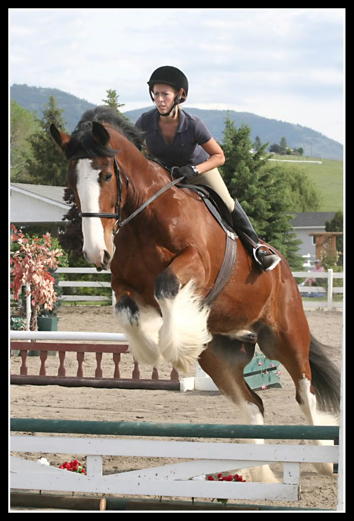 clydesdale horses   Ozzy the Jumping Clydesdale