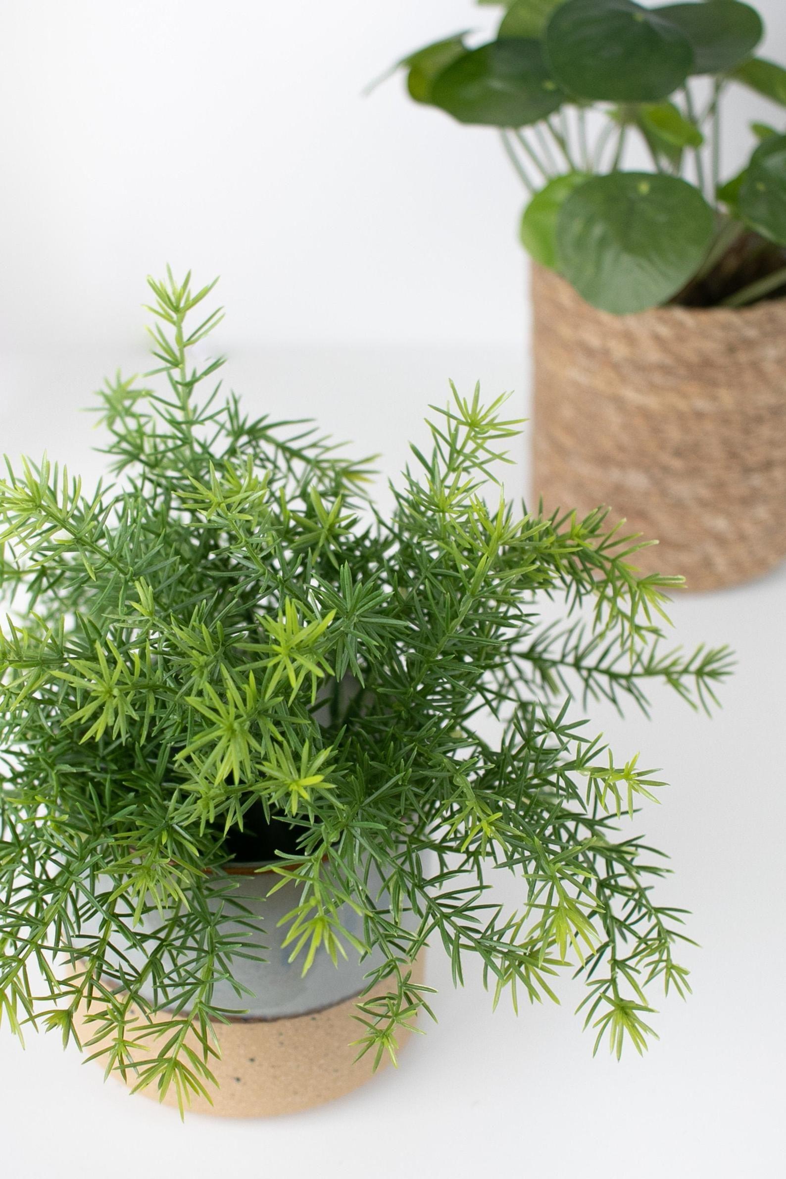 Asparagus Fern Artificial Plant Cute Bushy Green Houseplant Etsy In 2020 Asparagus Fern Artificial Plants Plants