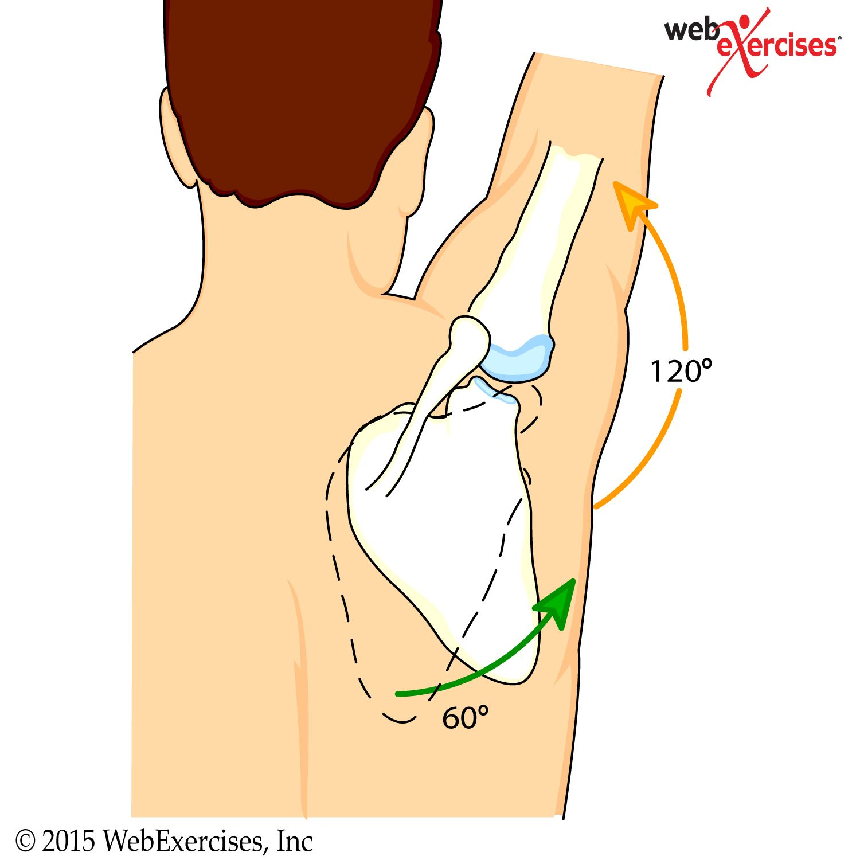 webexercises.shoulder1   hombro   Pinterest   Anatomía