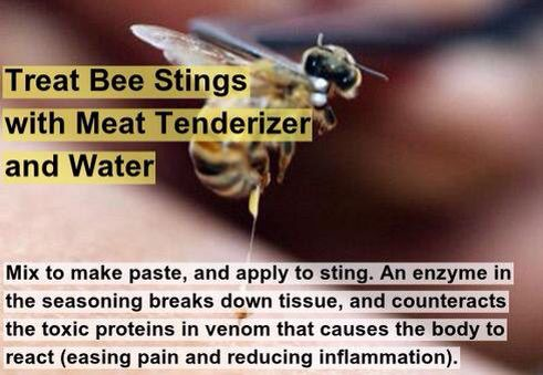 Picado De Abeja Treating Bee Stings Bee Sting Home Remedies