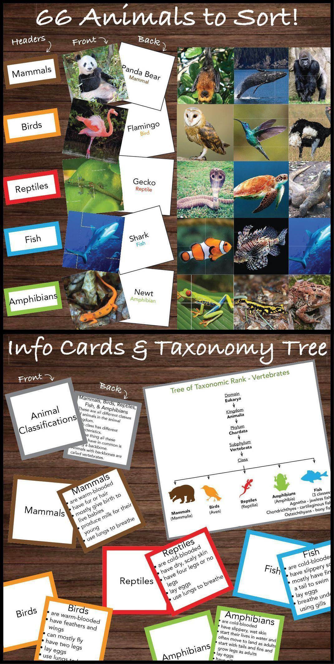 Sorting Activity: Animal Classifications (Mammal, Bird, Reptile, Amphibian,  Fish in 2020 | Animal classification, Amphibians, Mammals