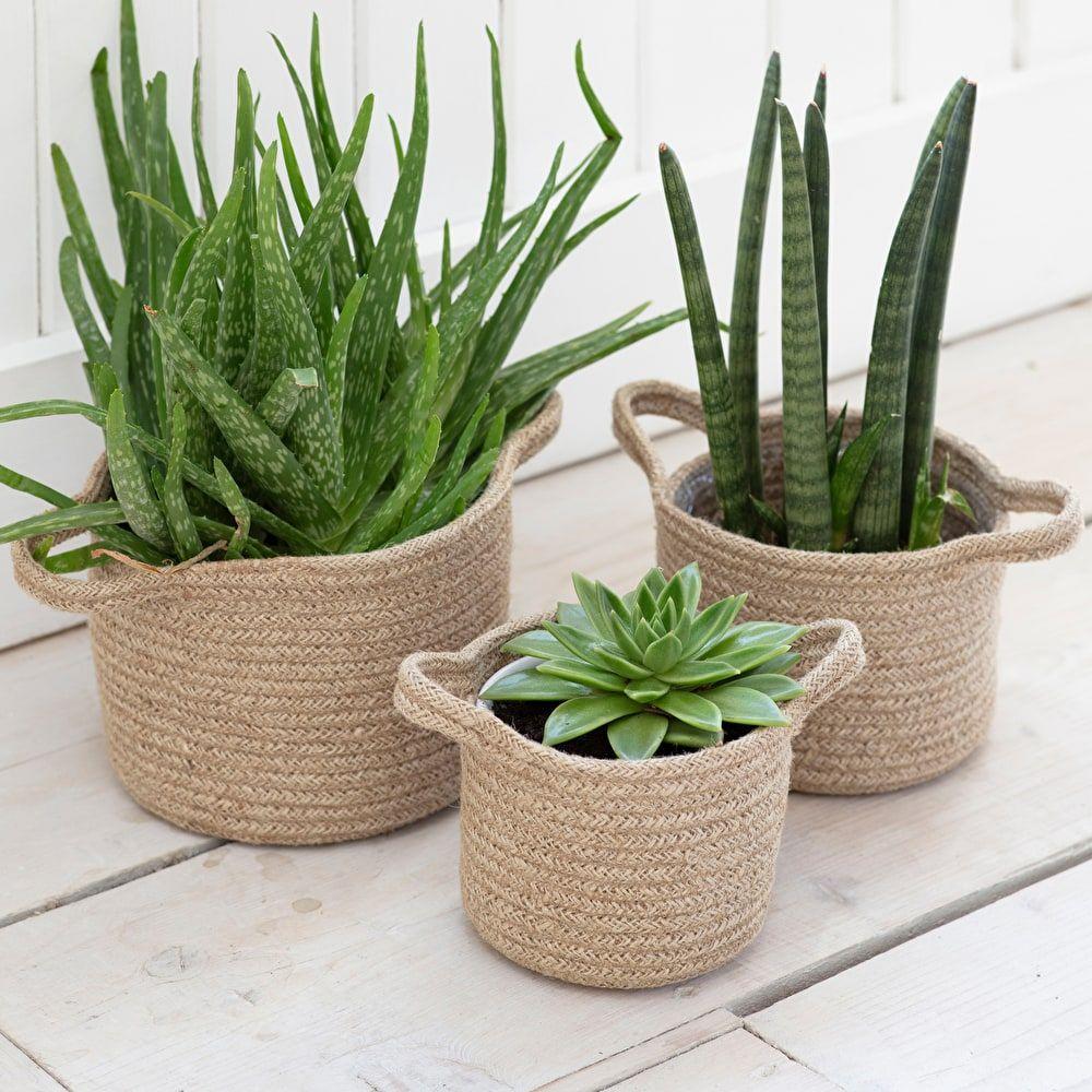 Set Of 3 Woven Plant Pots In 2020 Plant Basket Indoor Plant Pots Potted Plants