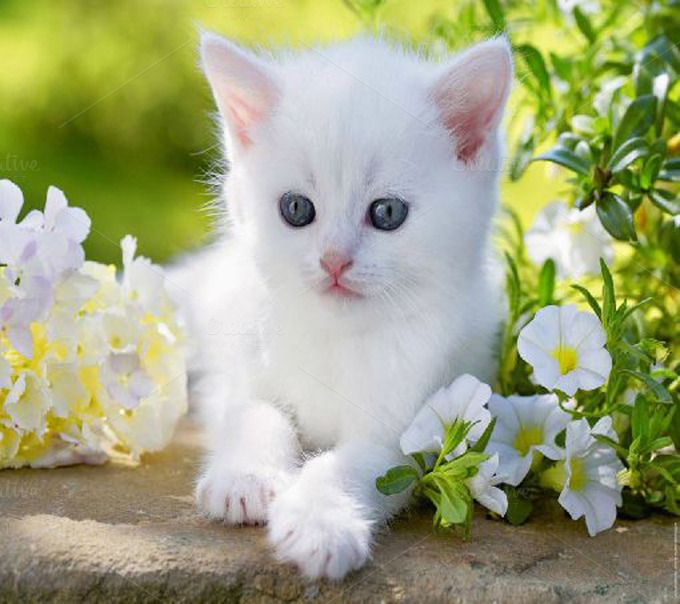 Lovely White Cat By Saima Jaman On Creative Market Baby Cats