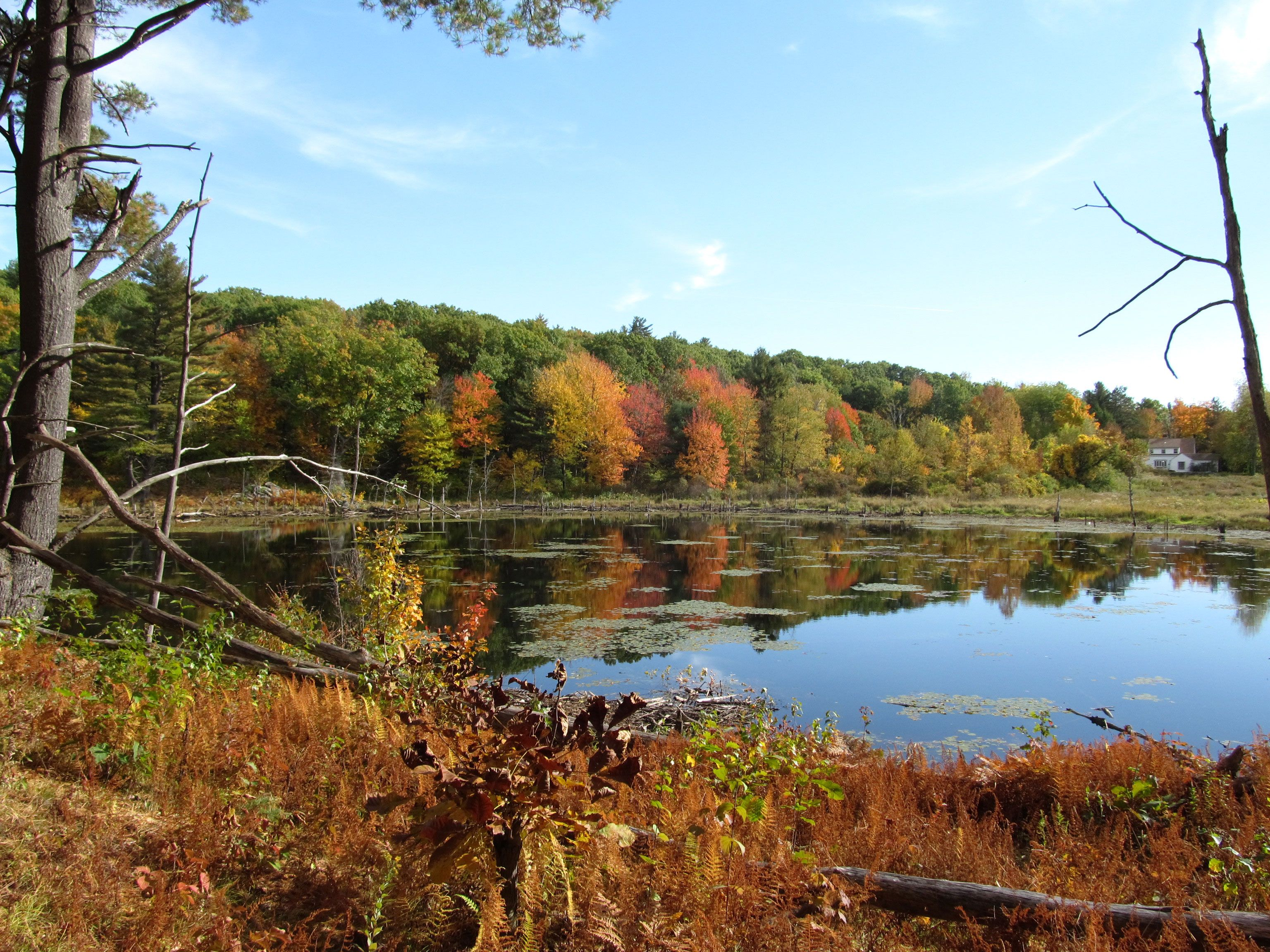 Wachusett Meadow Audubon Wildlife Sanctuary Massachusetts