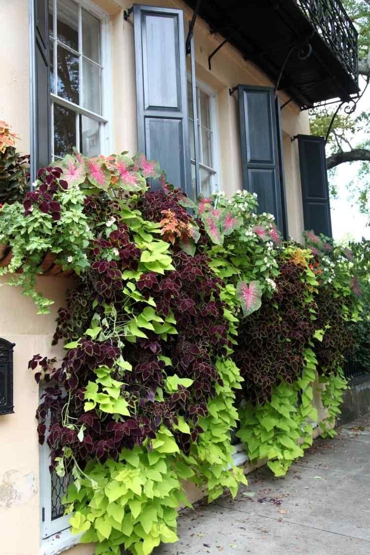 Balkon Pflanzen Und Blumen Blutenpracht Und Sichtschutz Mit