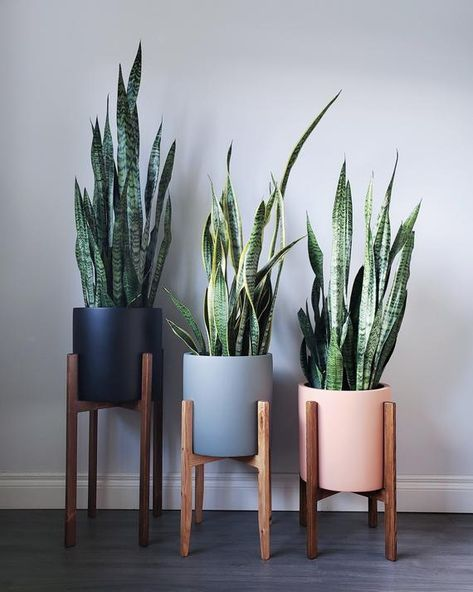 Handmade Wooden Plant Stands