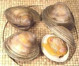 Clams Oysters Mussels Scallops Clams Cherrystone Clams Recipe Oysters