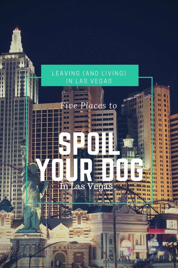 Five Places To Spoil Your Dog In Las Vegas Las Vegas Pet Friendly Hotels Vegas