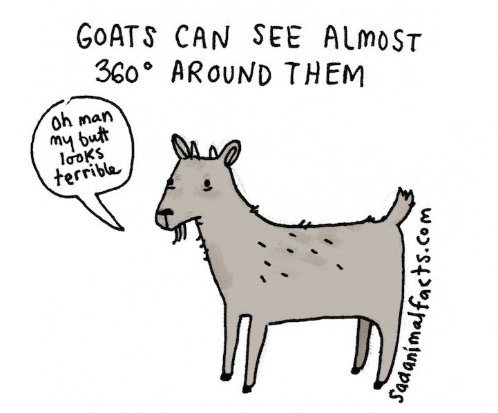 illustrations reveal sad facts about animals with charming wit
