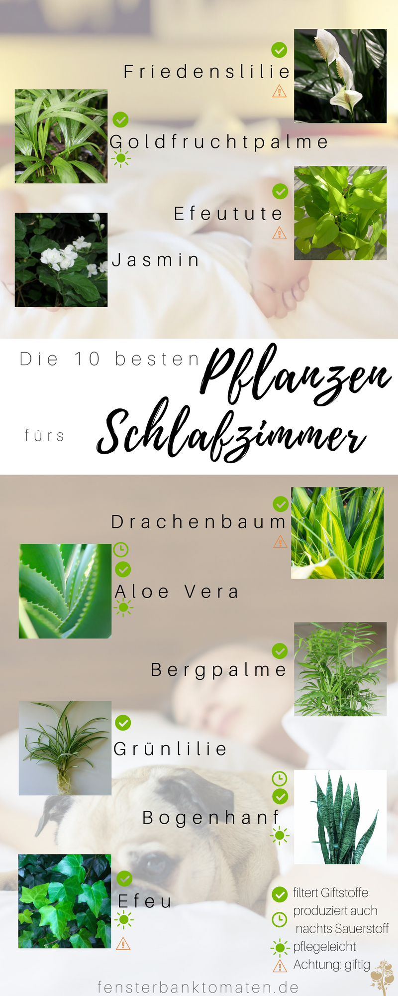 Die 10 besten Pflanzen fürs Schlafzimmer - so optimierst du deinen ...