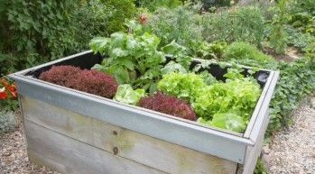 square foot gardening in a raised box