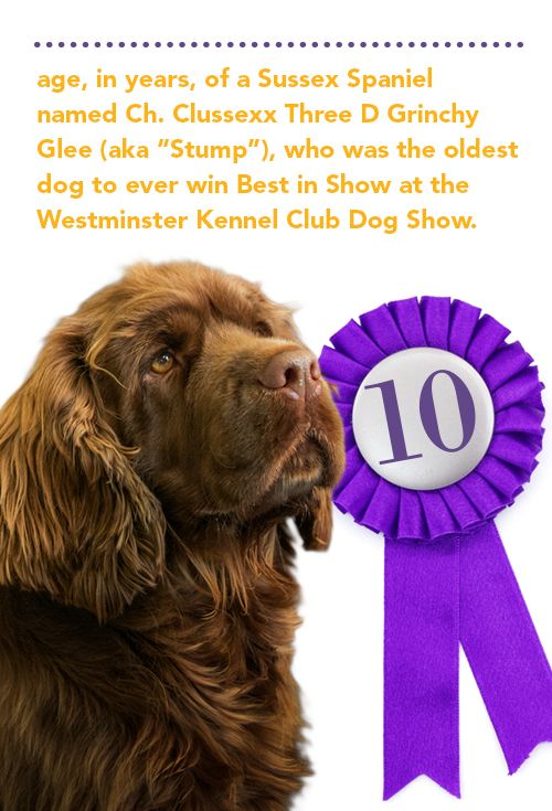 The Oldest Dog To Win Best In Show At The Westminster A 10 Year