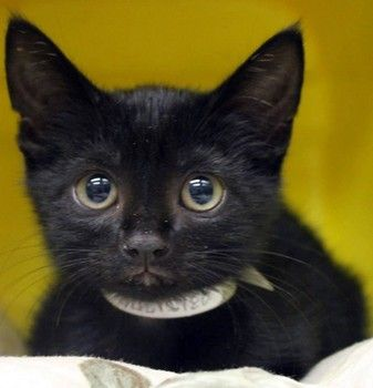 Ashley 2 Month Old Black Beauty Is Out Of Time At High Kill Sc Shelter Adopted Animal Rescue Black Beauties 2 Month Olds