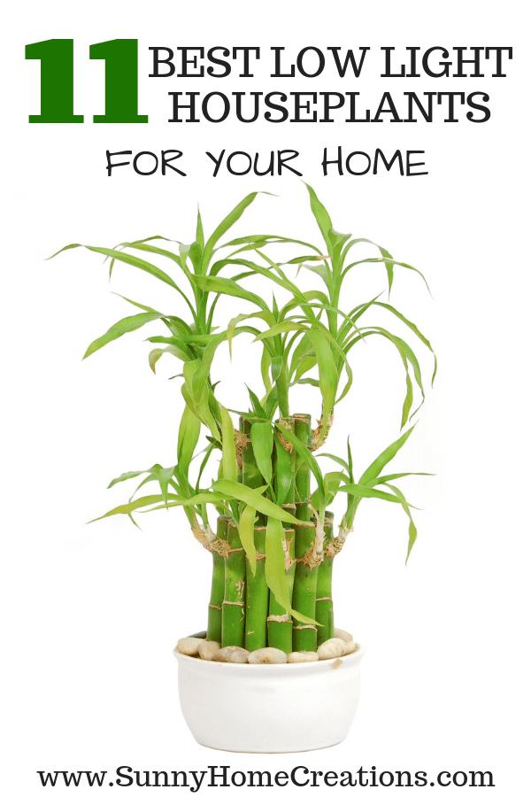 11 Best Low Light Indoor Plants For Your Home Indoor 400 x 300