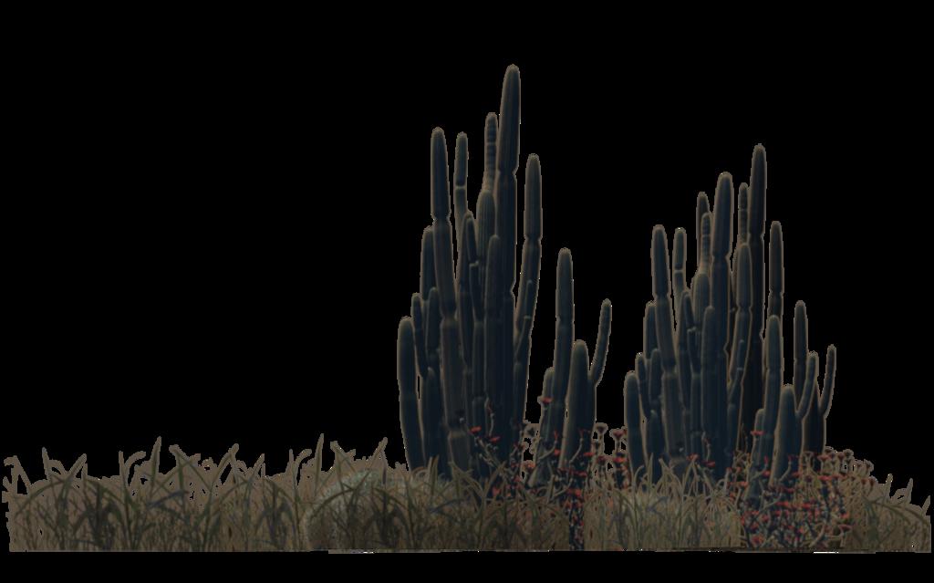 Pin De John Sankey Job En Plants Grass Plantas Del Desierto Imagenes De Cactus Cactus