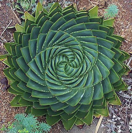 15 Plants That Teach Us Sacred Geometry At Its Finest | Wake Up World