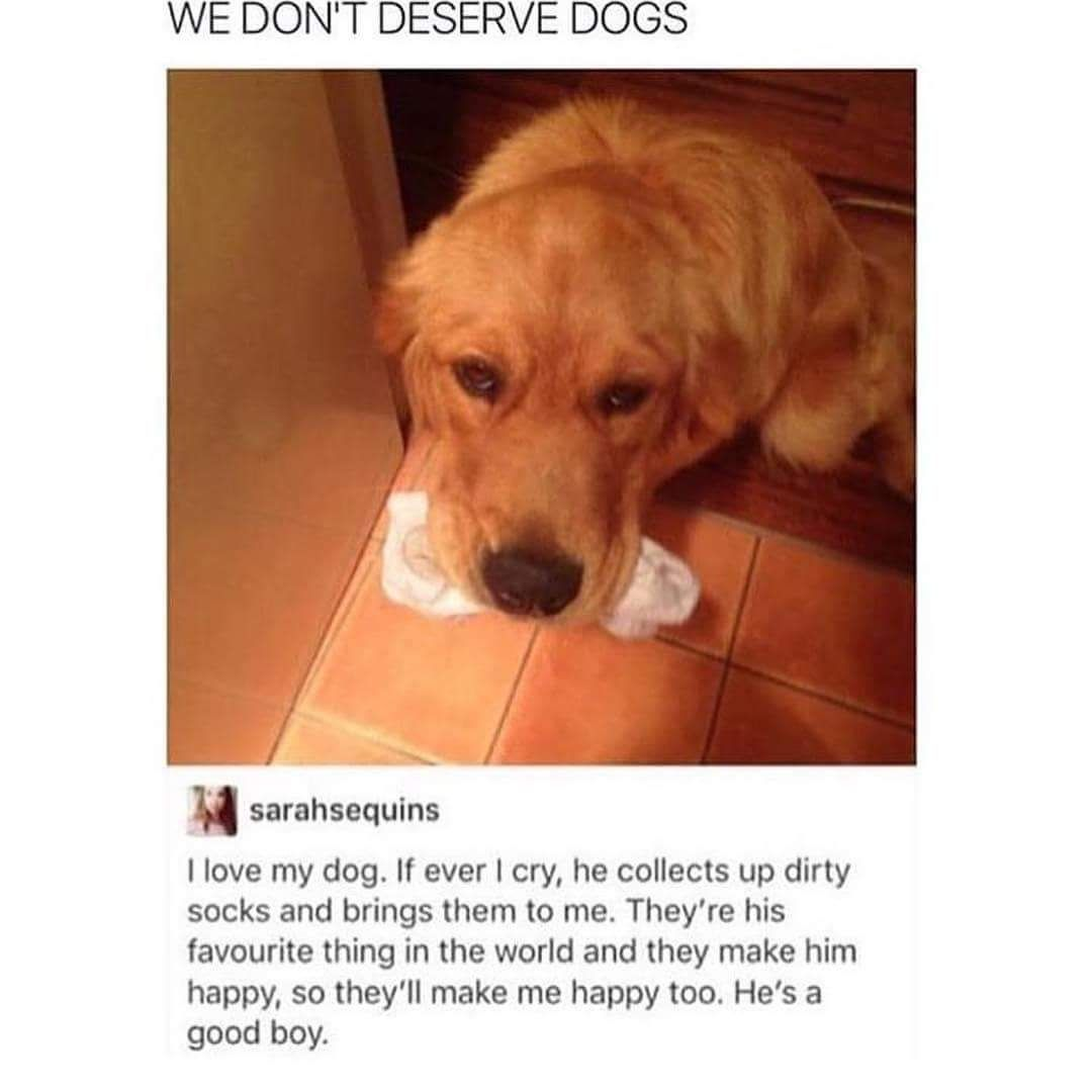 Pictures That Will Make Your Dog Cry